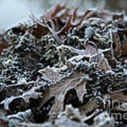 Seaweed And Oak Leaves Art Print