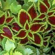 Sedona Floral Art Print