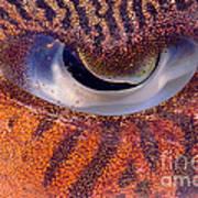 Sepia Cuttlefish Art Print
