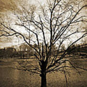 Sepia Tree Art Print