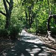 Shaded Paths In Central Park Art Print