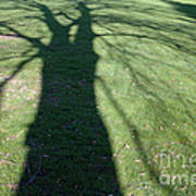 Shadow Of A Tree On Green Grass Art Print