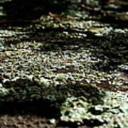 Shady Moss Art Print