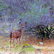 Shasta County Deer  Art Print