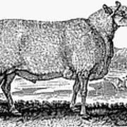 Sheep, C1800 Art Print