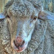 Sheep Print by Imagevixen Photography