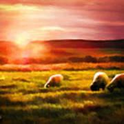Sheep In Sunset Art Print by Suni Roveto