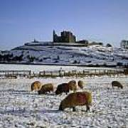 Sheep On A Snow Covered Landscape In Art Print
