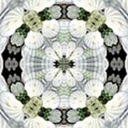 Shell Art 4 Art Print