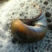 Shell In Sea Foam Art Print