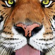 Sherekhan Art Print by Big Cat Rescue