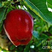 Shiny Red And Ripe  Art Print