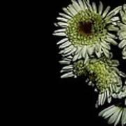 Shooting flowers Art Print