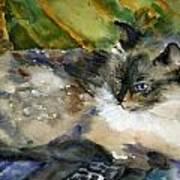 Siamese Basking Art Print