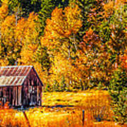 Sierra Nevada Aspen Fall Colors With Rustic Barn Art Print by Scott McGuire