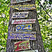 Signs On A Tree Art Print