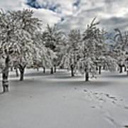 Silent Winter Art Print
