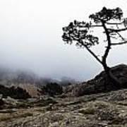 Silhouette Of Tree In Mist Art Print