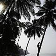 Silhouetted Man Climbing A Palm Tree To Art Print