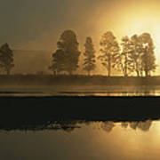 Silhouetted Trees Along The Yellowstone Art Print