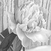 Silver Beauty Art Print