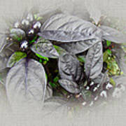 Silver Leaves And Berries Art Print
