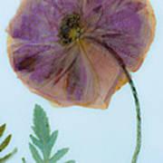 Simply Poppy  Art Print