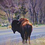 Single Buffalo In Yellowstone Np Art Print