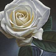 Single White Rose Art Print