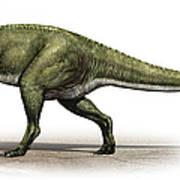 Sinraptor Dongi, A Prehistoric Era Art Print