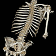 Skeletal Reconstruction Art Print