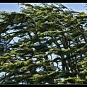 Slanted Branches Art Print