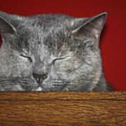 Sleeping Pixie Art Print