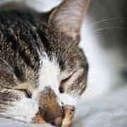Sleepy Cat Art Print