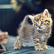 Small Cute Kitten Art Print