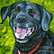 Smiling Lab Print by Susan A Becker