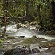Smokey Mountain Stream No.326 Art Print