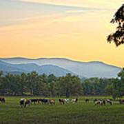 Smoky Mountain Horse Herd Art Print