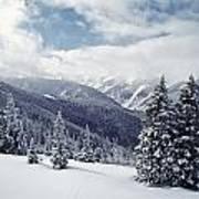 Snow Covered Pine Trees On Mountain Art Print