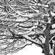 Snow Covered Tree Branches Art Print