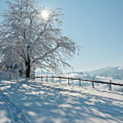 Snow Covered Tree With Sun Shining Through It Art Print by © Peter Boehi