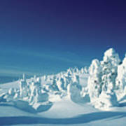 Snow Covered Trees, Yellowstone National Park, Wyoming, Usa Art Print