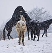 Snow Day I Print by Betsy Knapp