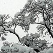 Snow Falling On Branches Art Print