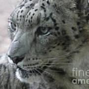 Snow Leopard Profile Art Print by Chris Hill