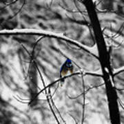 Snow On Beak Art Print