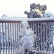 Snow On Grilles Art Print