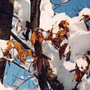 Snow On The Fall Leaves Art Print
