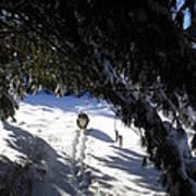 Snow Trail-under The Boughs Art Print