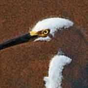 Snowy Egret Profile Painterly Art Print